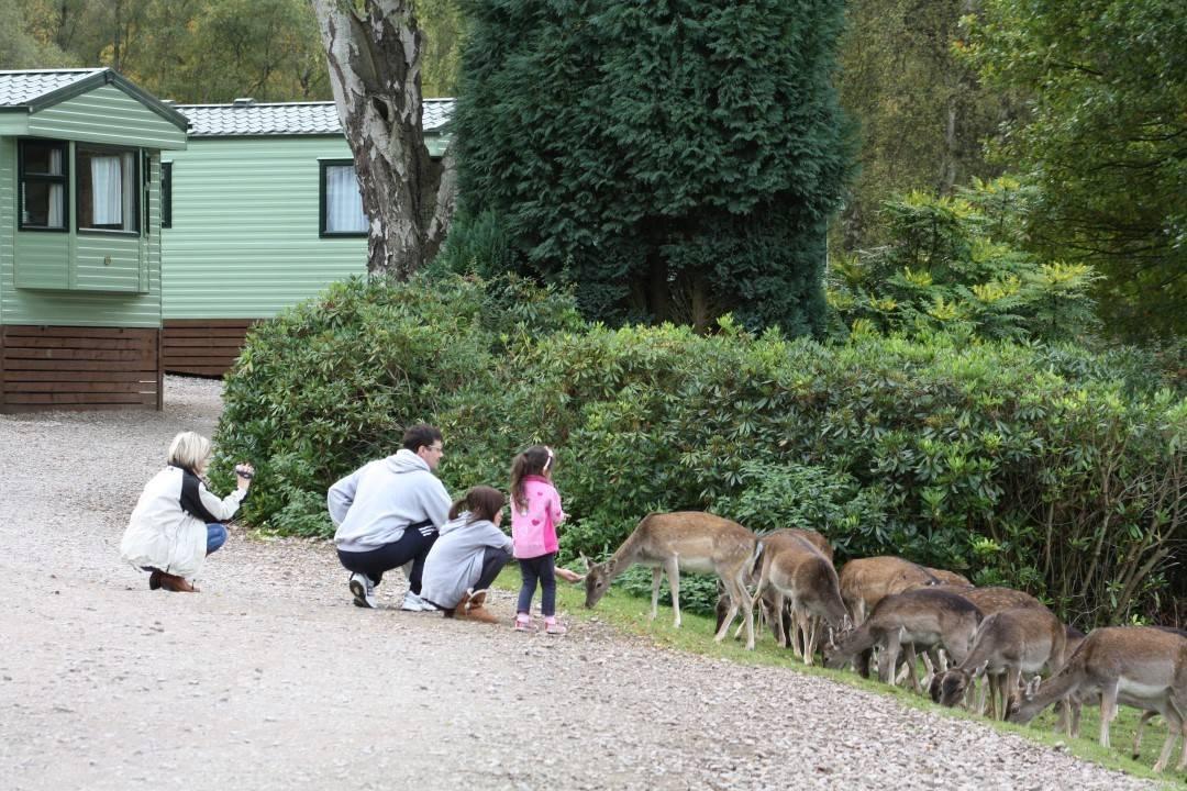 feeding-the-deer-by-hire-fleet-custom