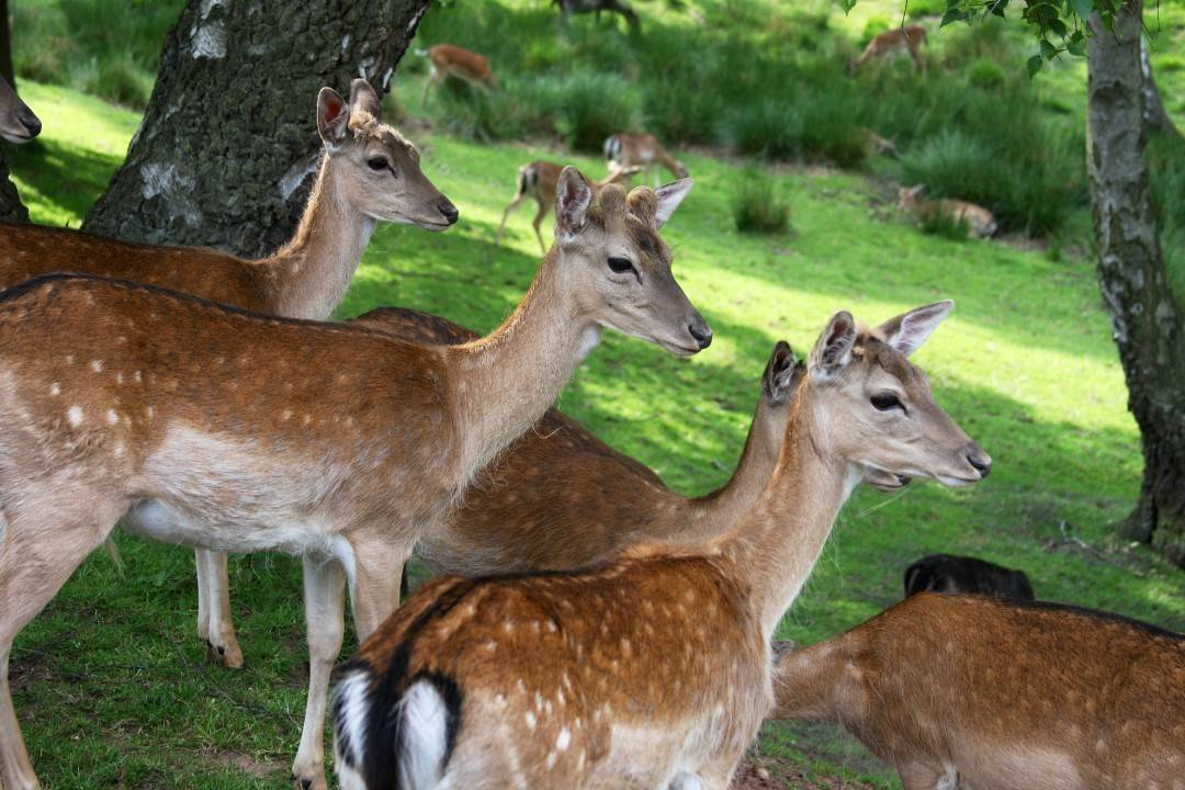 group-deer-by-eld-2-2-custom